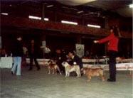 O Bulldog e as exposições