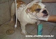 saude_higiene_alimentacao1-canil_stellfer